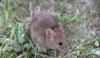 Houseboat problems with mouse, rats, mice, rodents ....