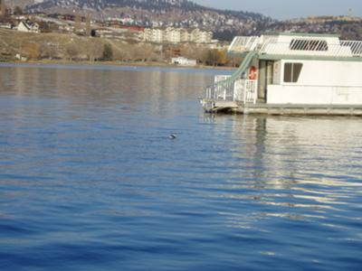 Houseboat Moorings - moorage is great for house boats.