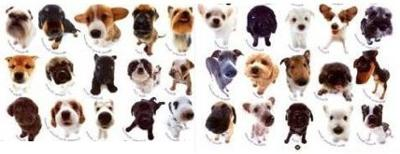 Animals & Pets for Houseboats - the best dog breeds are?